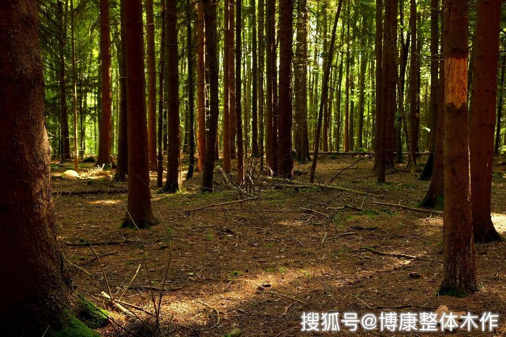 原木整装定制的魅力:树之灵性,木质高雅|博康整体木作