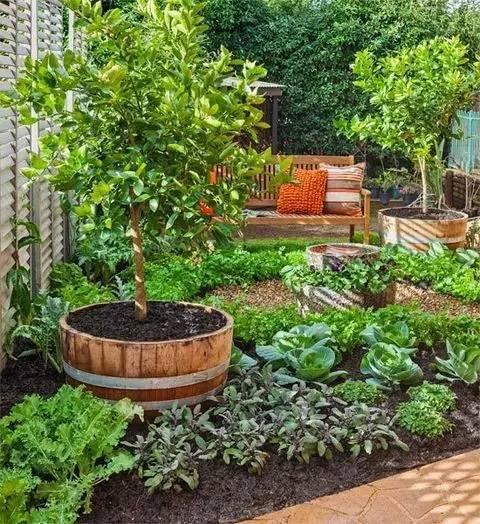 菜园,造的比花园还美
