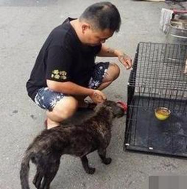 流浪狗散发出恶臭味,看清狗狗的样子后,却做出这样的举动!