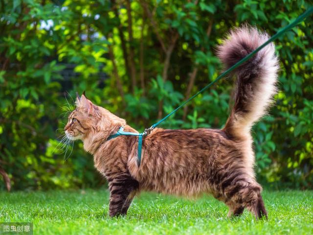 我网赌被黑了啊_通过猫咪尾巴,我们就能知道它心里的小秘密 出黑流程 3