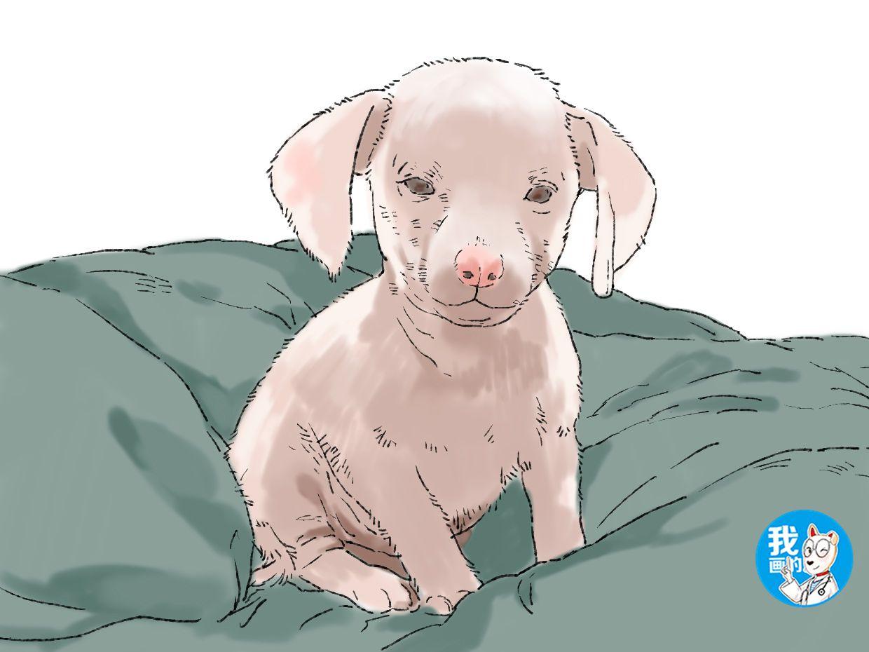 原创 狗狗生下崽子,长得却是一副猪样,经检查后发现了异样