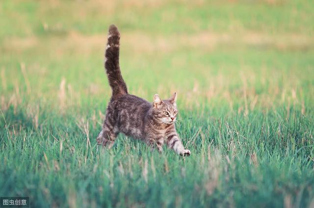 我网赌被黑了啊_通过猫咪尾巴,我们就能知道它心里的小秘密 出黑流程 4