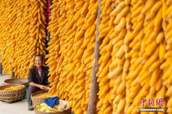 中国农业农村部:粮食价格基本稳定有望再迎丰收年