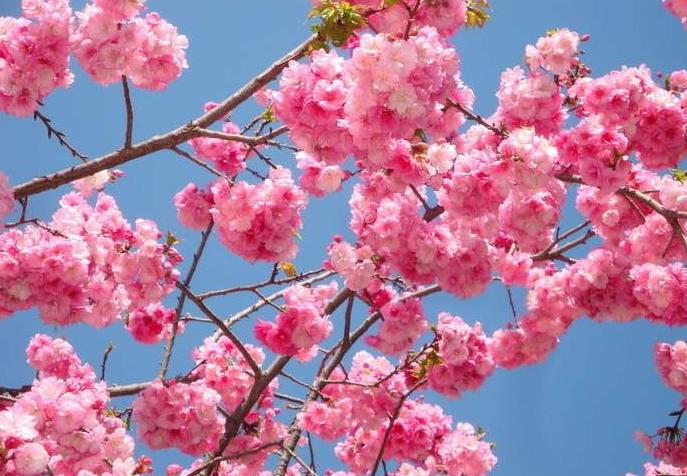 11月开始,喜鹊门前叫,财运一顺百顺,桃花朵朵开的3个生肖