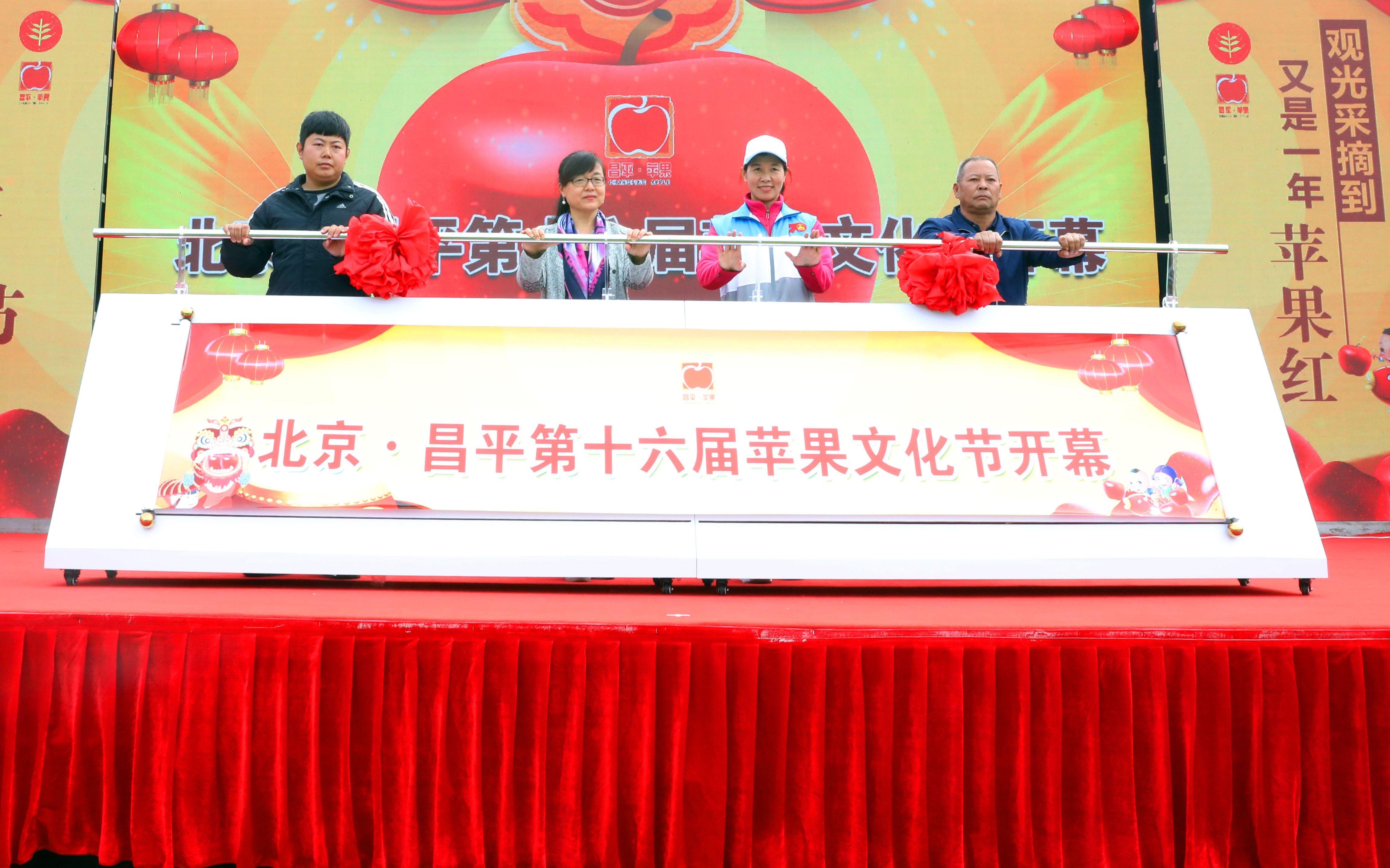 """15度甜的苹果红了昌平推出四条""""逛吃""""线路"""