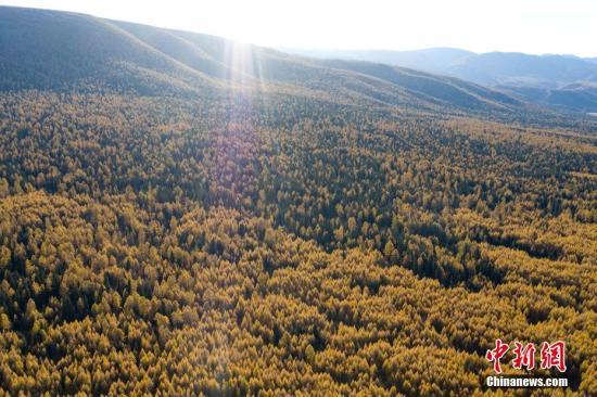 上半年全国森林旅游游客量达9亿人次同比增长14%