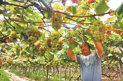 http://www.qwican.com/jiaoyuwenhua/2548303.html