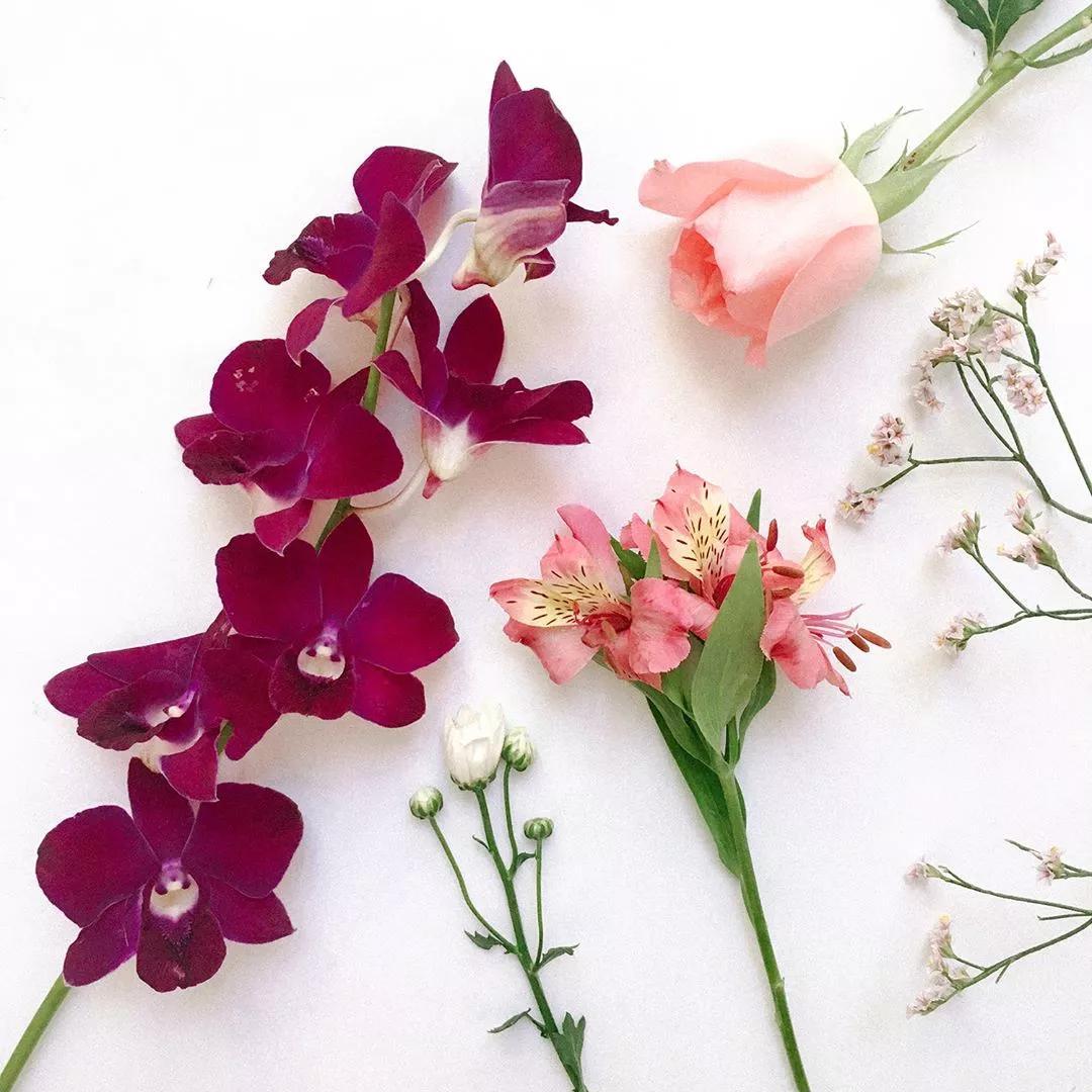 养花误区   不剪根   远离催热剂—乙烯,远离蔬菜和水果,因为它们会释放大量乙烯,导致鲜花衰败.