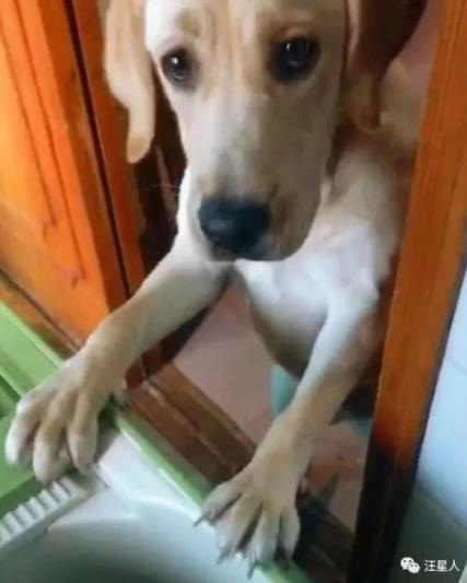 主人因养狗搬三次家,狗看着不好使的洗衣机一脸幽怨:这过的啥日子啊