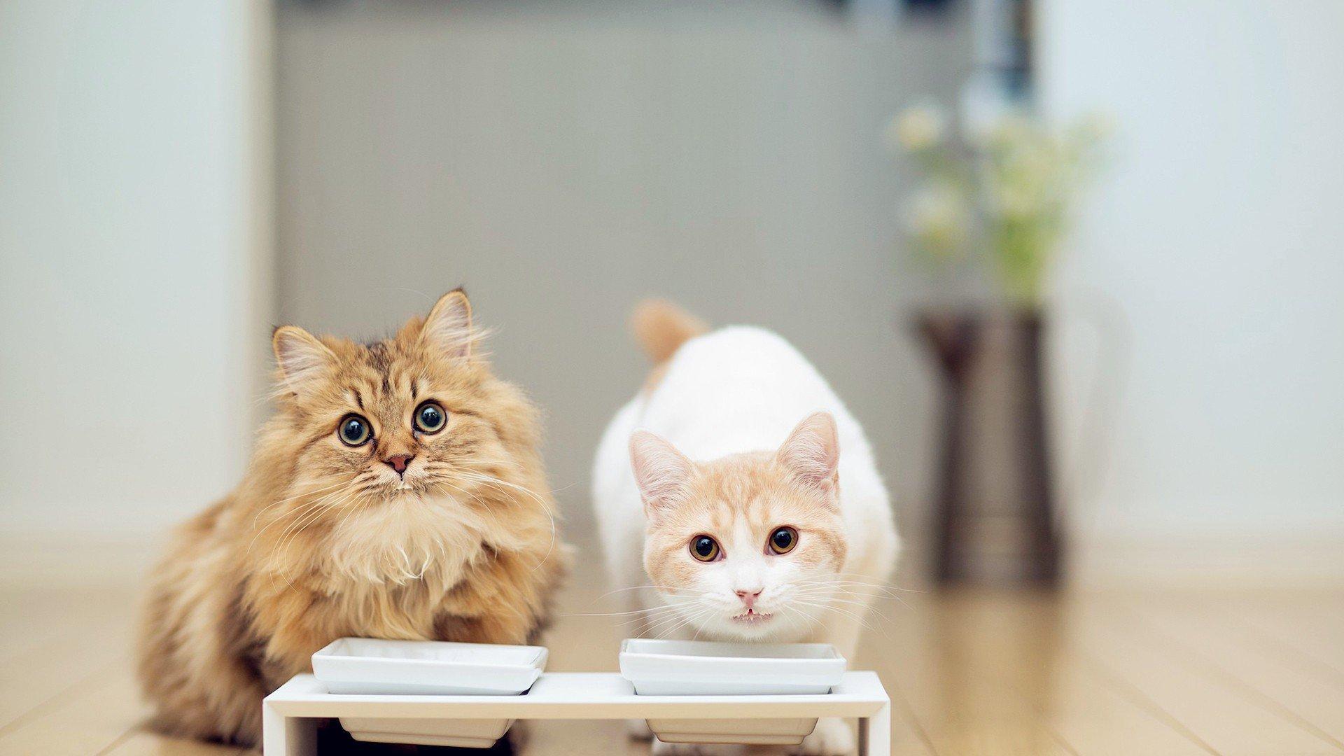 猫咪细小病毒的治疗方案_狗民知道_狗民网