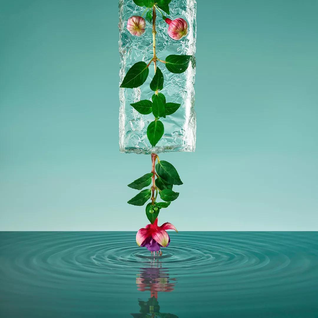 花艺培训 震惊 原来冰箱可以创作出如此惊艳绝伦的花卉摄影