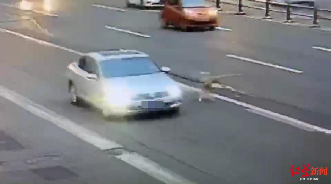绵阳一司机边开车边遛狗:怕刚洗过澡的狗把车弄湿_违法