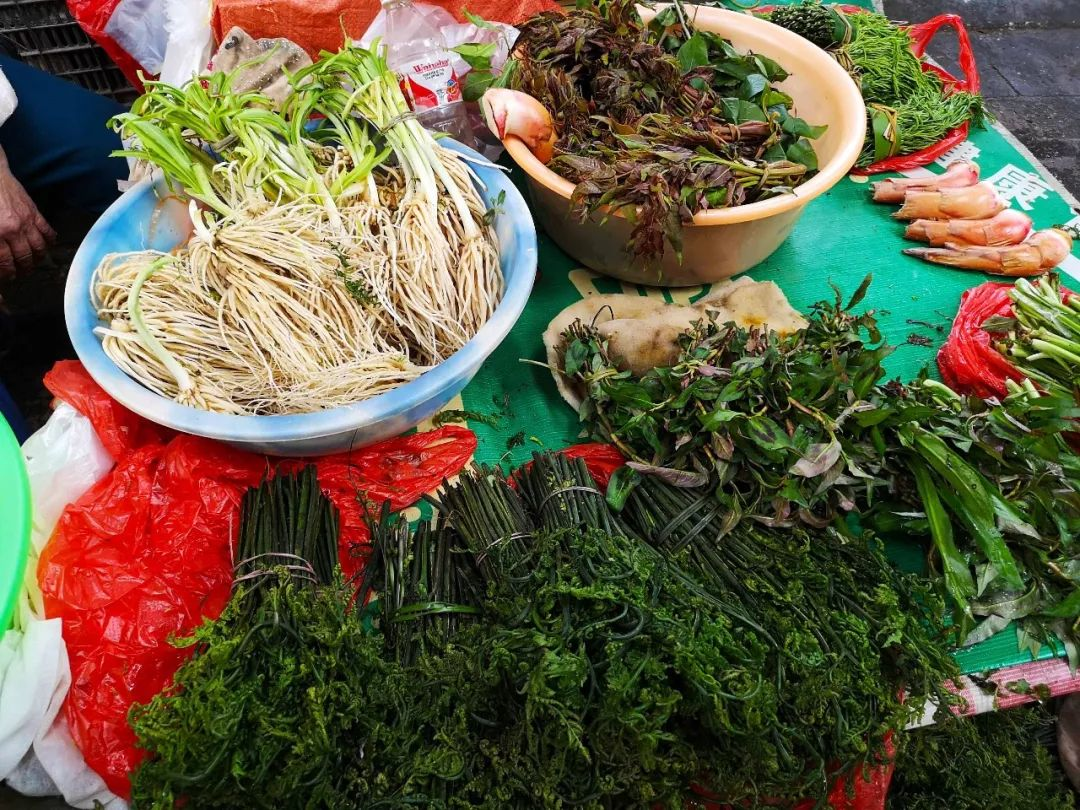 都让人,云南,广东,菜市场,眼界,野菜,鲜花,都是菜,草芽,仙人掌,见闻记录