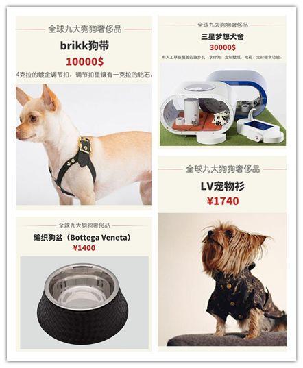 名媛宠物奢侈品,22K金宠物碗排不上