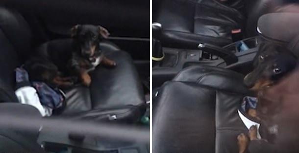 爱尔兰一名男子被锁车外宠物狗帮忙打开车门