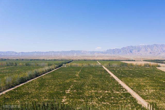 宁夏贺兰神酒庄,葡萄园面积达10万亩,目前其它酒庄都没有它大