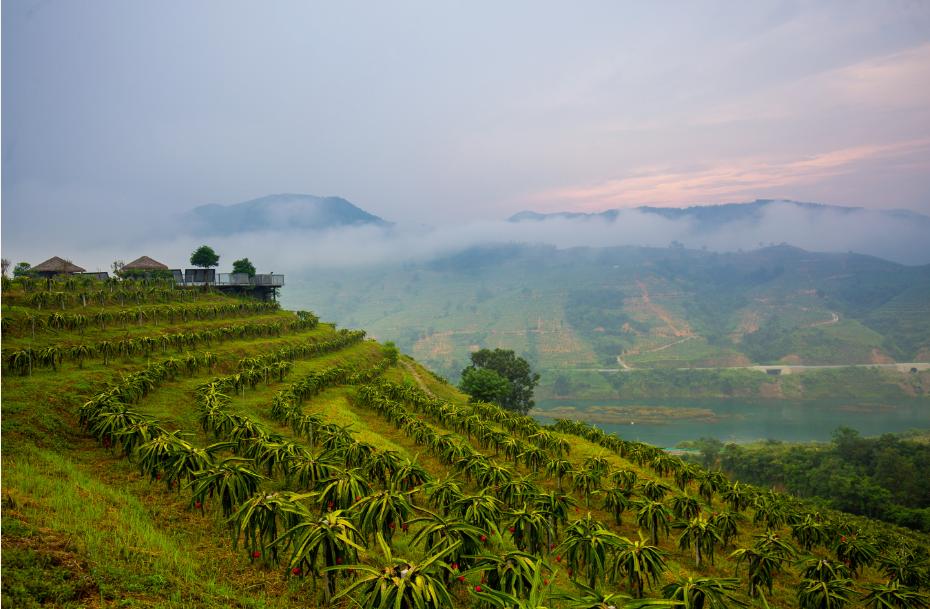 从云南到贵州 百胜中国必胜客扶业计划 助力大山深处的绿色希望