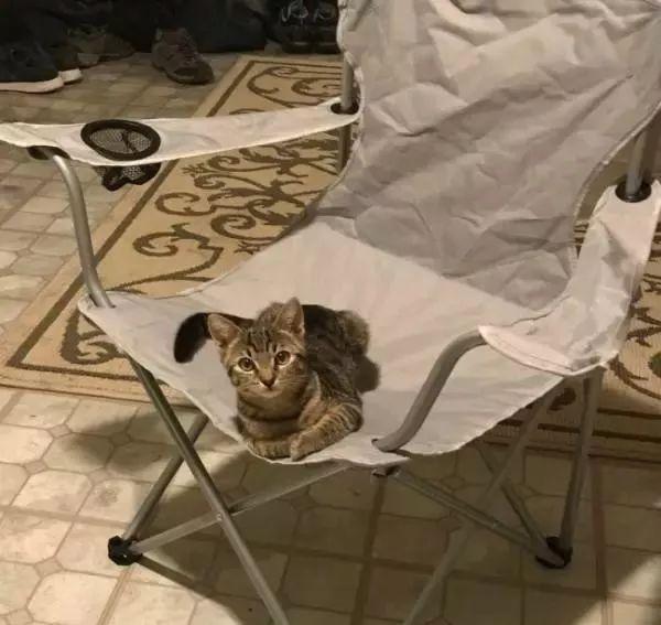 回家发现猫咪大方趴在椅子上,男子大惊:我没养猫啊