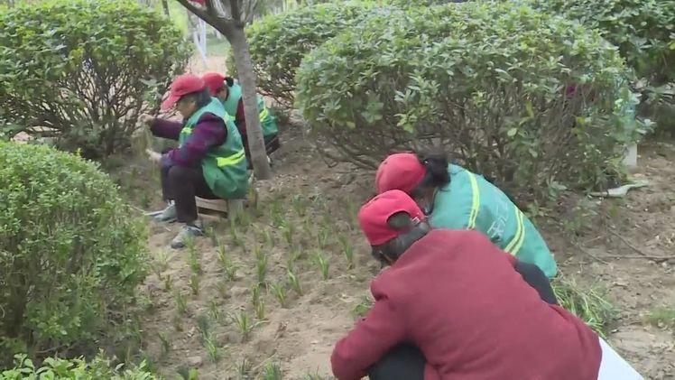 在主干道上栽植这些苗木,泗阳又美成花园