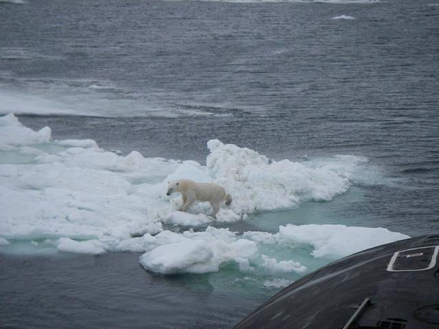 俄罗斯潜艇遇到北极熊!当气候变得更温暖,这种相遇会越来越多