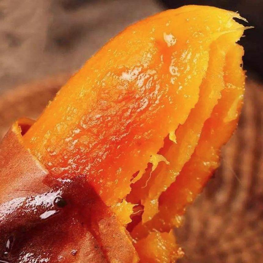 独家!专访烟薯25育种人