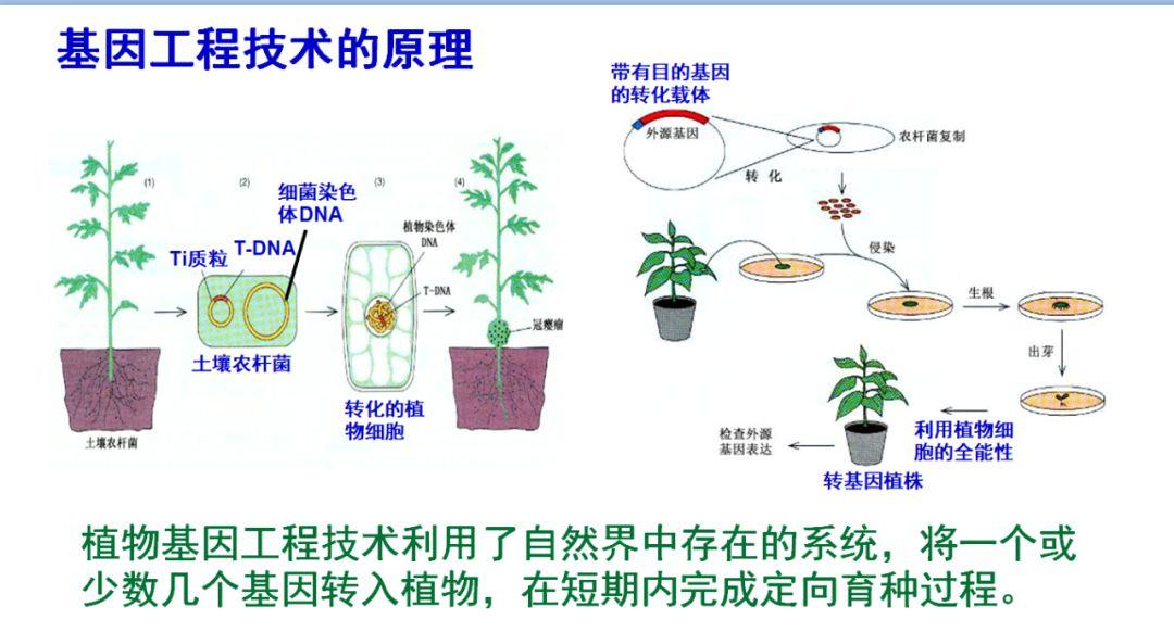 生长豆的生长原理是什么_水豆是什么症状图片
