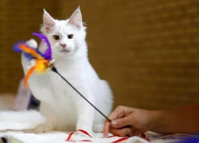 网赌被黑怎么办吧_百年张裕推出猫元素新品;北京一小区多只宠物狗被毒害丨宠业简报