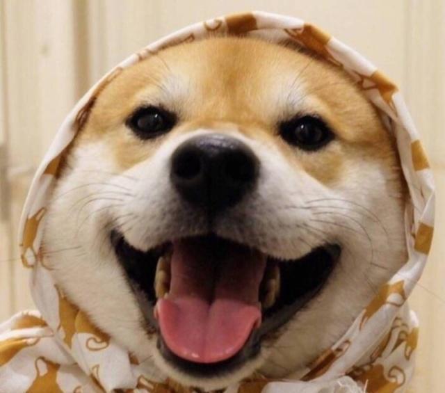 网赌被黑不给提款系统维护怎么办_为了对付不听话的狗子,主人在狗身上绑了气球,小狗就被带上了天