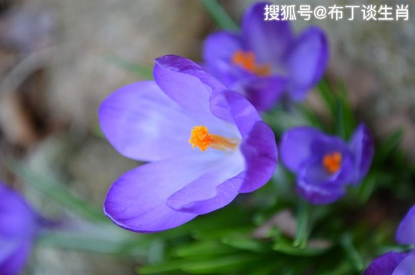 原创             恭喜四生肖福气大增,10月30号开始有福星护佑,富贵不请自来!