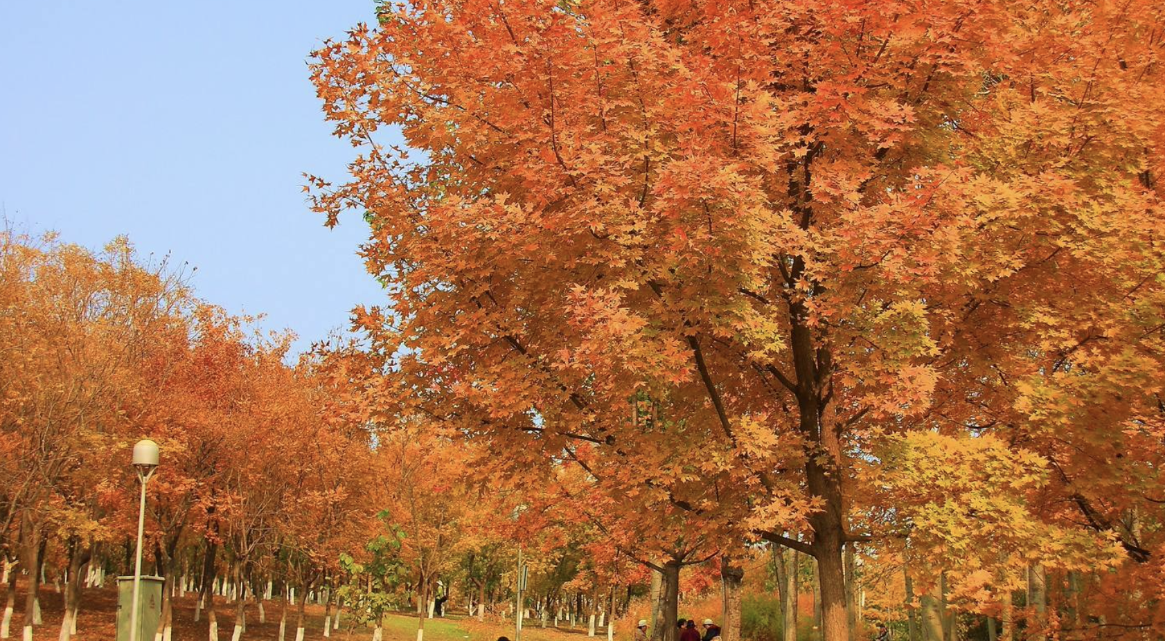 原创             北京迎来红叶最佳观赏期,秋日大片可以约起来了