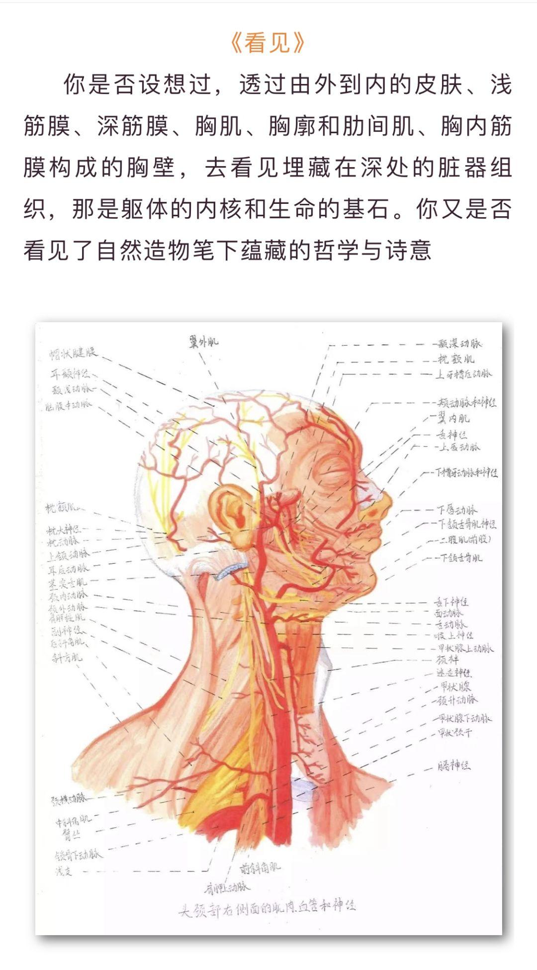 医学生人体解剖素描走红,网友 一群被 耽误 的灵魂画手