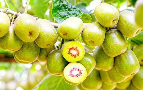 """在家怎樣""""催熟""""水果呢? 奇異果和獼猴桃有什么區別?"""