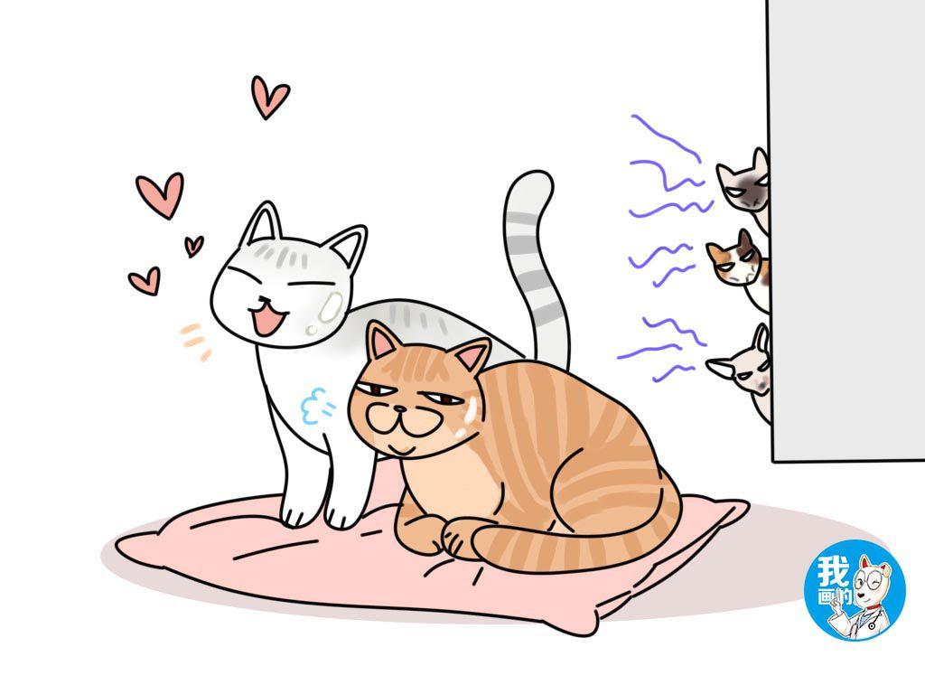 养2只种猫繁殖能赚钱吗图片