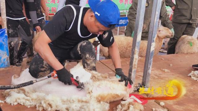 """兴羊业,发羊财!饲养肉羊逾500万只,甘肃庆阳发布""""羊产业""""成绩单→"""