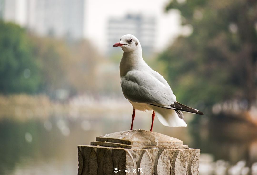 """云南被稱為""""中國最特別的省份"""",沒有二三線城市,景色美如畫!"""
