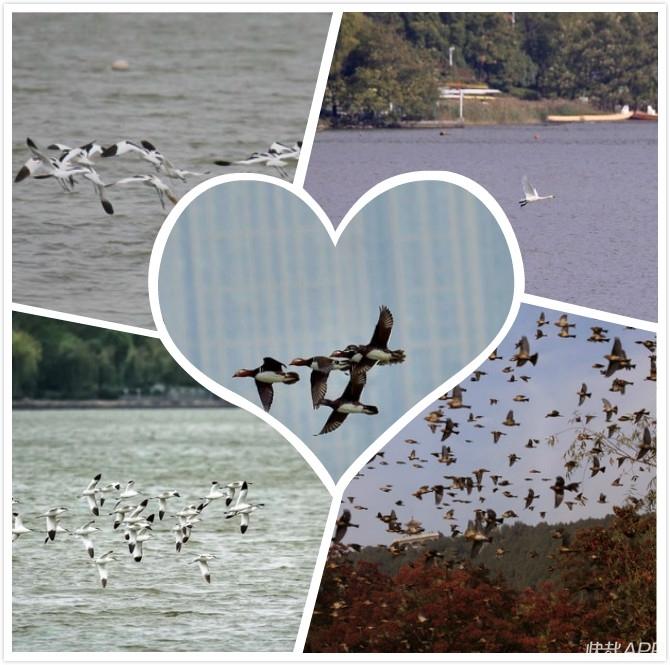 美翻了!南迁候鸟纷纷打卡云龙湖!天鹅、大雁......带孩子们去看看吧