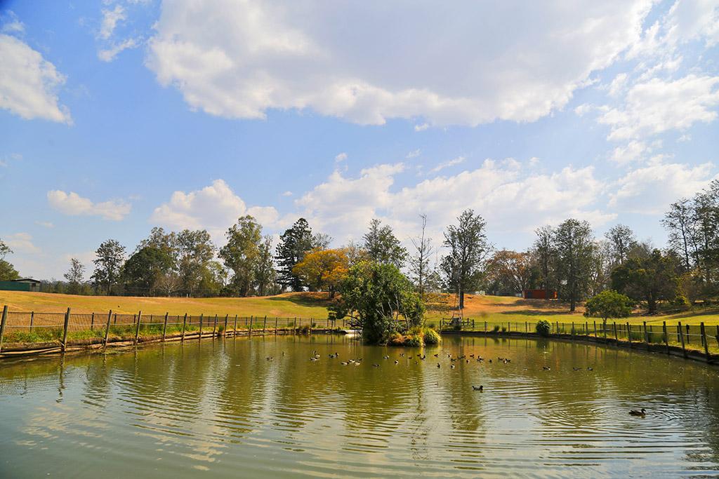 原创             打卡布里斯班考拉公园,这里是亲子游的好地方