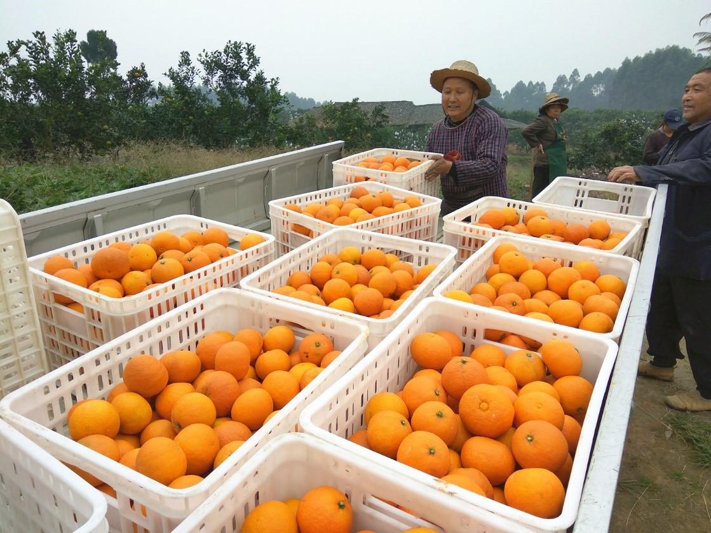 京东生鲜11.11 低价购好物,网红果冻橙爱媛38号5斤仅需9.9元
