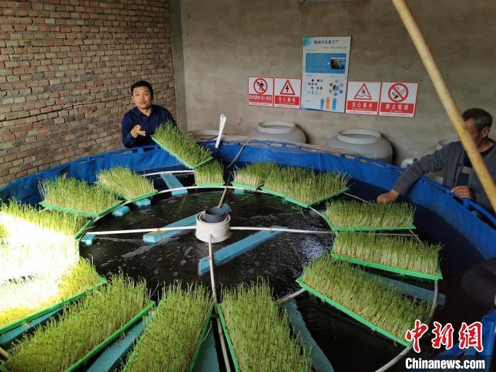 """探访河北武强""""鱼菜共生""""微工厂项目为农村闲置劳动力增收"""