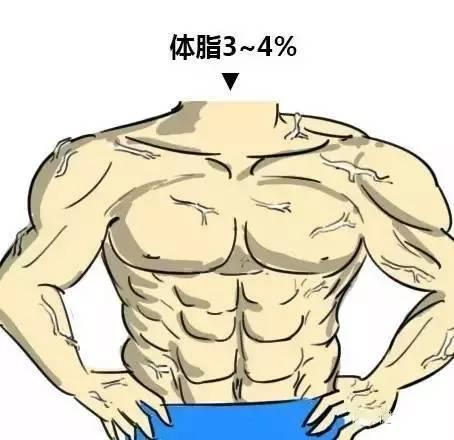 体脂3~4%