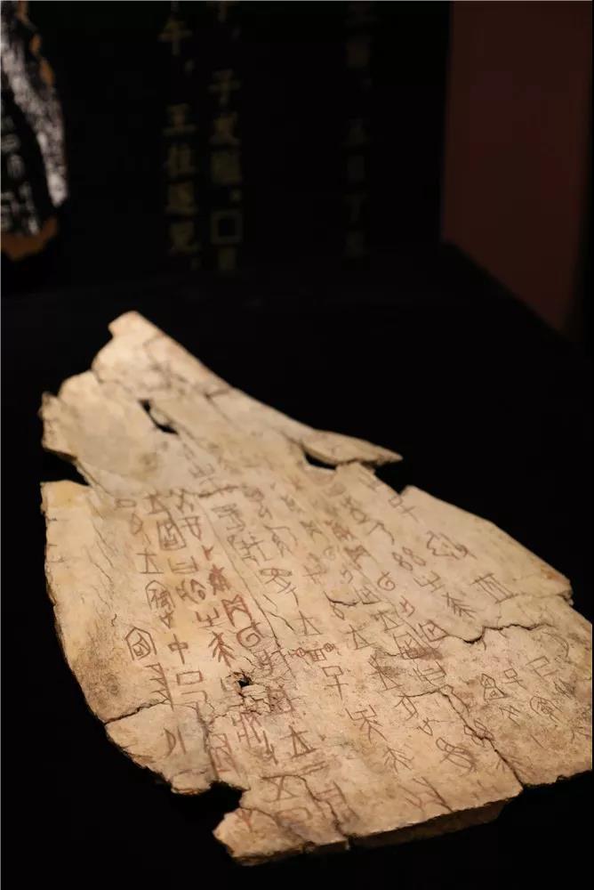 让我们从一片龟甲重新认识三千多岁的汉字 | 知书