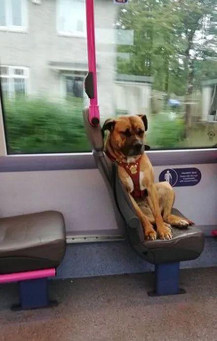 狗狗坐车到终点,才发现自己被抛弃了,但它的苦瓜脸却换来了奇迹!