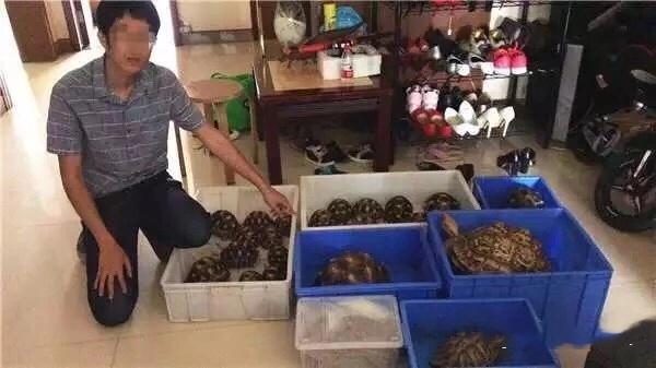 因贩卖濒危野生动物辐射陆龟,警方抓获8名嫌疑人_袁某