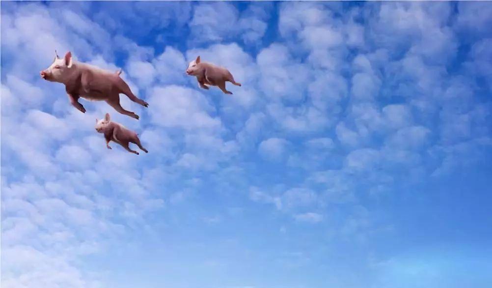 猪肉价格已开始回落 猪的了猪瘟还有救吗?