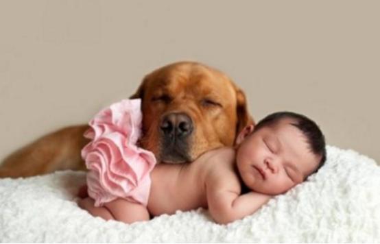 怀孕被迫将狗送回娘家,婆婆却追到娘家扔狗,儿媳转身打胎离婚