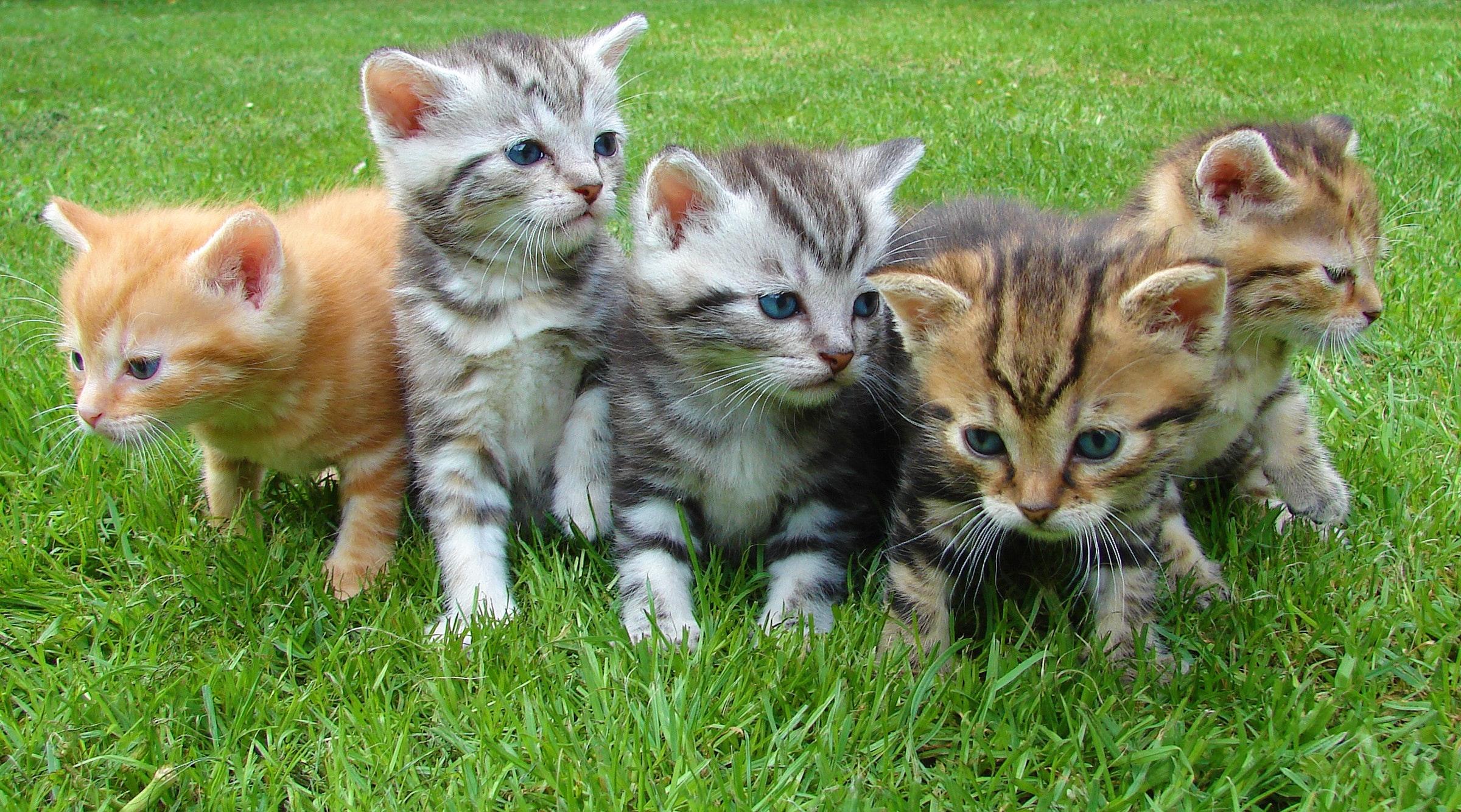 我是你可爱的小猫被抓