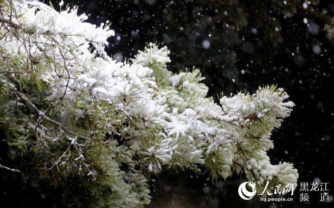黑龙江省发布大风蓝色预警和寒潮蓝色预警局地气温下降10-12℃