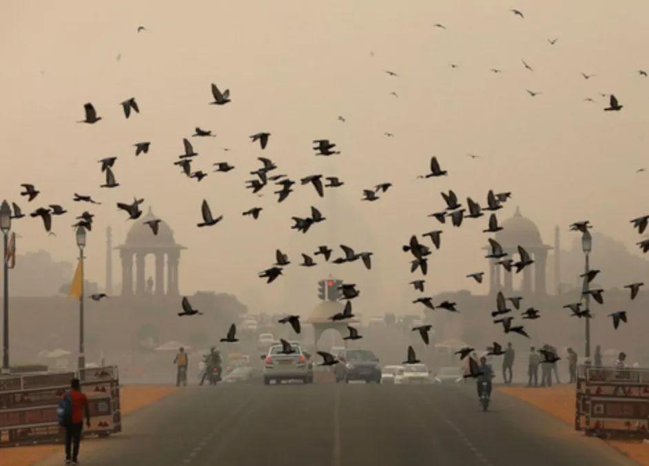 """印度首都遭雾霾封锁 宛如""""毒气室"""""""