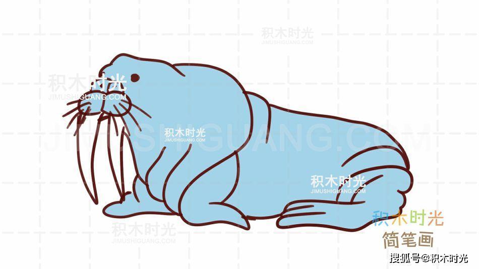 海狮简笔画教程,画海狮简笔画