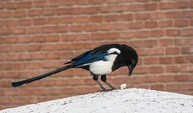 涨姿势 误会大了 原来,鸳鸯曾是兄弟的象征,麻雀不是一种鸟图片
